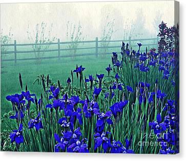 Irises At Dawn 3 Canvas Print