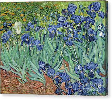 Munch Canvas Print - Irises By Vincent Van Gogh by Esoterica Art Agency