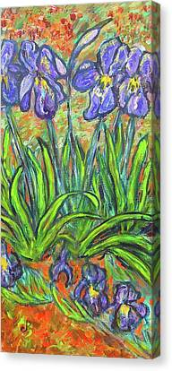 Irises In A Sunny Garden Canvas Print by Carolyn Donnell