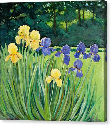 Irises In The Garden Canvas Print by Betty McGlamery