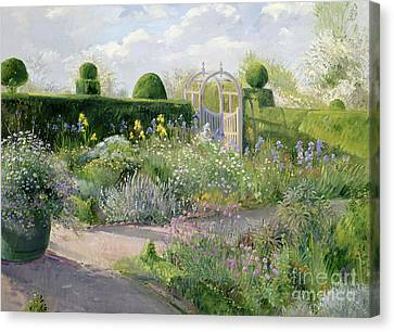 Irises In The Herb Garden Canvas Print by Timothy Easton