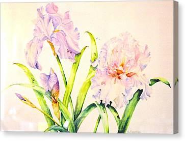 Irises Canvas Print by Nancy Newman