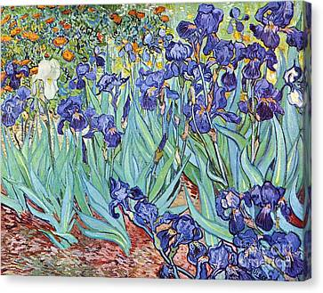 Irises Canvas Print by Pg Reproductions