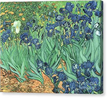 Impressionism Canvas Print - Irises by Vincent Van Gogh