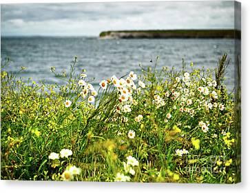 Irish Flower Impression Canvas Print