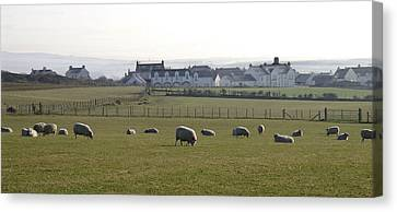Irish Sheep Farm Canvas Print by Henri Irizarri