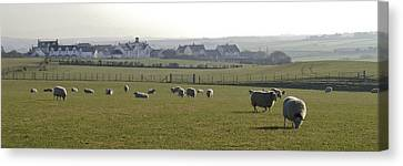 Irish Sheep Farm I Canvas Print by Henri Irizarri