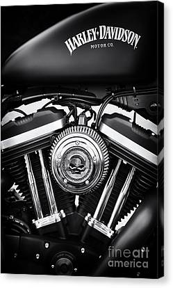 Iron 883 Canvas Print by Tim Gainey