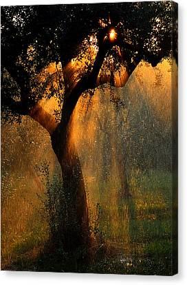 Irrigation Canvas Print by Stefano Castoldi