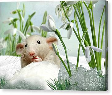 Is It Spring Yet ? Canvas Print by Morag Bates
