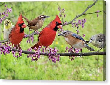 Canvas Print featuring the photograph Is It Spring Yet? by Bonnie Barry