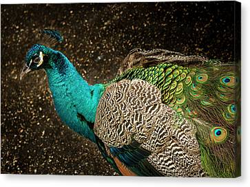 Canvas Print featuring the photograph Is She Looking ? by Jean Noren