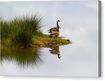 Geese Canvas Print - Is This Heaven by Randall Ingalls