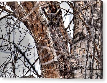 Blending Canvas Print - Is This Tree Looking At Me? by Michael Morse