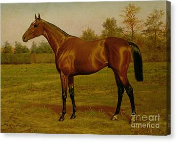 Isinglass, Triple Crown, 1893 Canvas Print by Harrington Bird