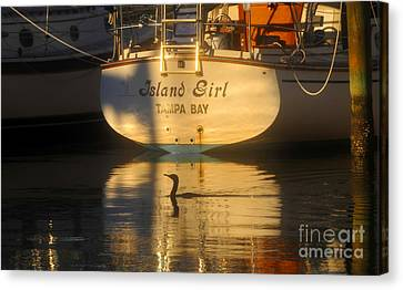 Phalacrocorax Auritus Canvas Print - Island Girl by David Lee Thompson