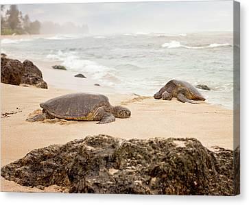 Island Rest Canvas Print by Heather Applegate