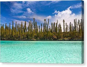Isle Of Pines Canvas Print