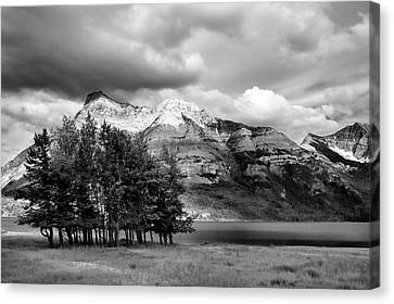 Isolated Copse On Waterton Lake Canvas Print by Allan Van Gasbeck