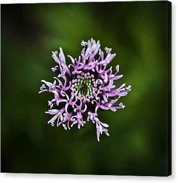 Isolated Flower Canvas Print