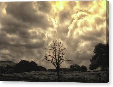 Isolated Canvas Print by Martin Newman