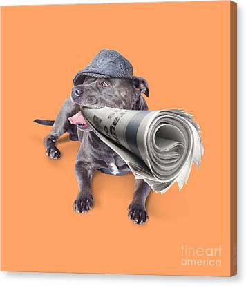 Isolated Newspaper Dog Carrying Latest News Canvas Print
