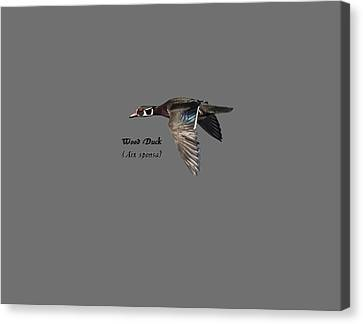 Isolated Wood Duck 2017-1 Canvas Print by Thomas Young
