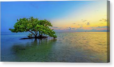 Mangrove Forest Canvas Print - Isolation by Chad Dutson