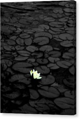 Flowers Canvas Print featuring the photograph Isolation by Roberto Alamino