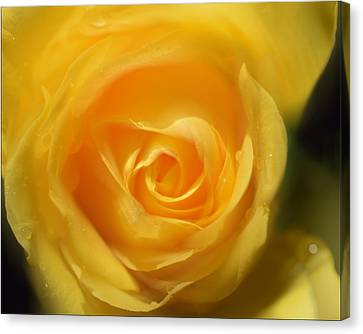 Canvas Print featuring the photograph It Is At The Edge Of The Petal That Love Waits by Douglas MooreZart