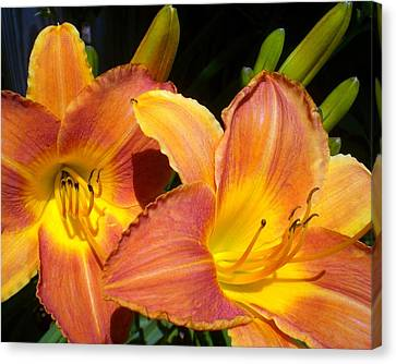 It Is So True Lily Canvas Print by Cynthia Daniel
