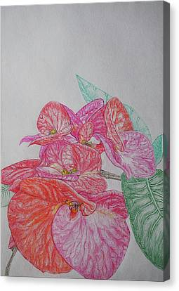 It Is The Flowers Or The Leaves? Original Color Pencil Painting By Karol Canvas Print