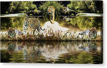 Canvas Print featuring the photograph It Must Be Time For A Tiger Nap by Diane Schuster