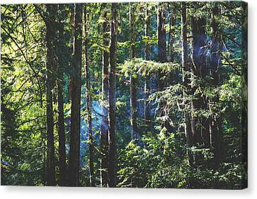 Marin County Canvas Print - It Shines For You by Laurie Search