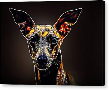 Italian Greyhound Canvas Print by Alexey Bazhan
