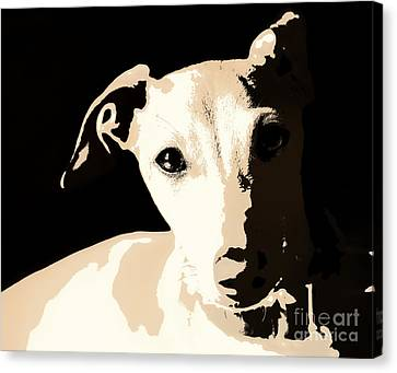 Italian Greyhound Poster Canvas Print by Angela Rath