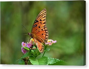 Butterfly Enjoying A Flower Canvas Print