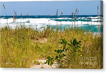 Its A Shore Bet Canvas Print by Michelle Wiarda