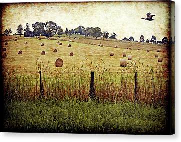 Canvas Print featuring the digital art Its Baling Time by Margaret Hormann Bfa