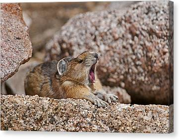 Canvas Print featuring the photograph It's Been A Long Day by Gary Lengyel