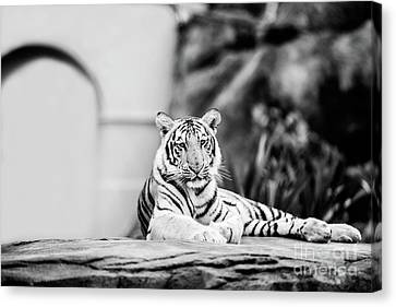 Canvas Print - It's Good To Be King - Bw by Scott Pellegrin