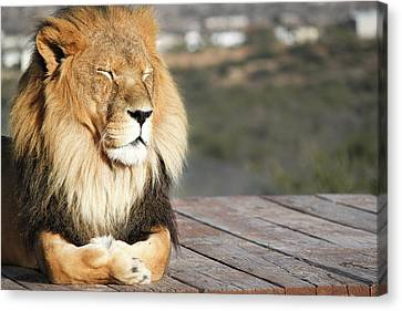 It's Good To Be King Canvas Print by Josh Klein