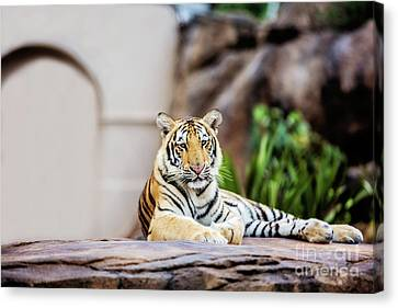 Canvas Print - It's Good To Be King by Scott Pellegrin