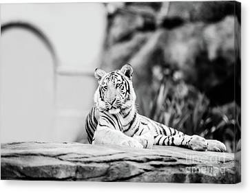 Canvas Print - It's Great To Be King - Bw by Scott Pellegrin
