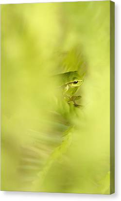 It's Not Easy Being Green - Tree Frog Hiding  Canvas Print