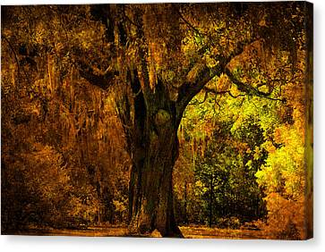 It's Not The Angel Oak Canvas Print by Susanne Van Hulst