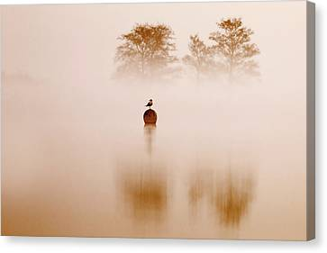 It's Oh So Quiet Canvas Print by Roeselien Raimond