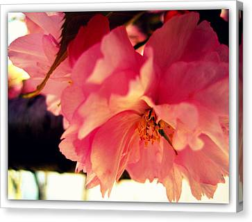 It's So Pink Canvas Print by Jhoy E Meade