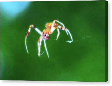 Itsy Bitsy Spider Canvas Print by Bill Cannon