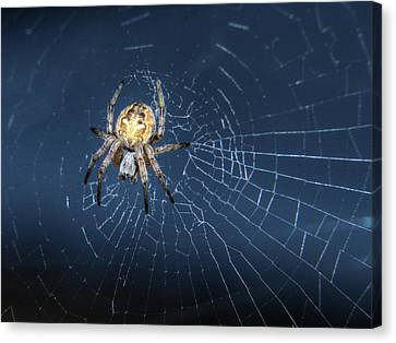 Itsy Bitsy Spider Canvas Print by Richard Stephen